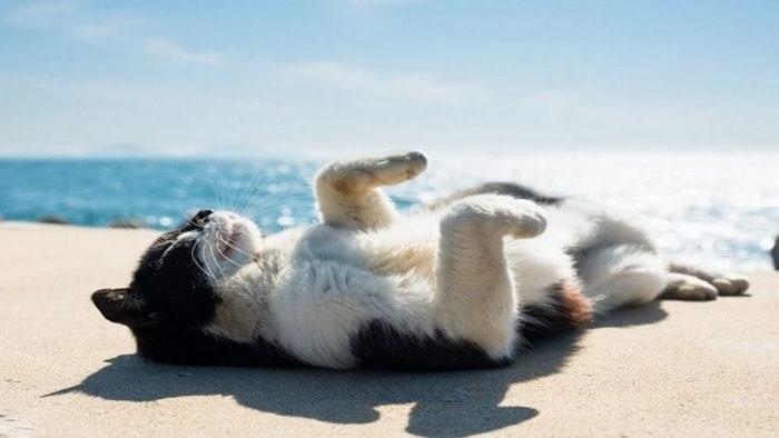 Image result for Animals sunBathing