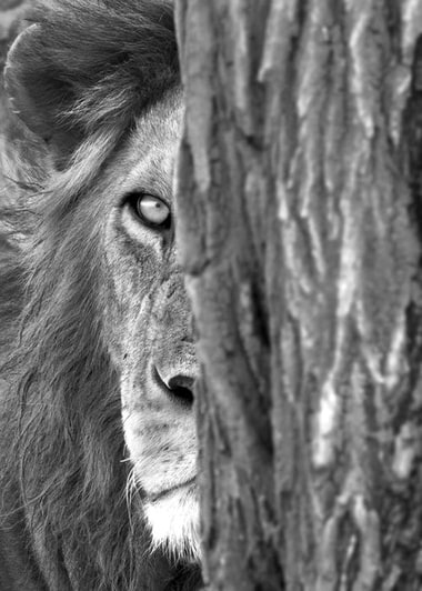 amazing animals in black and white list